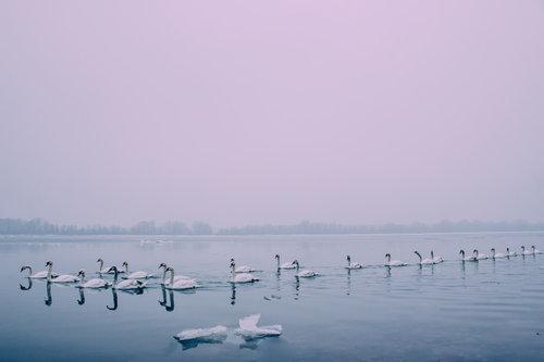 Danuberiverchild na lepom plavom Dunavu
