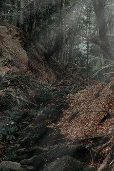 Danuberiverchild шума