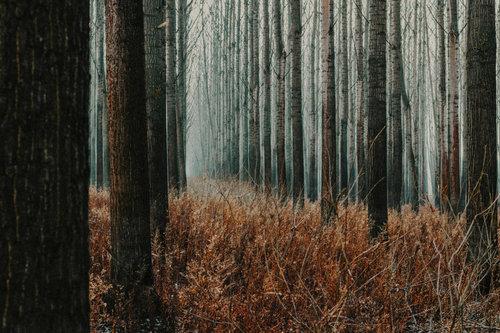 Danuberiverchild forest code