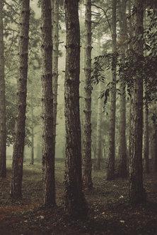 Danuberiverchild jesenja magla