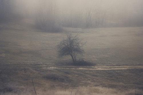 Danuberiverchild magla