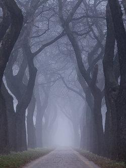 Deni90 Mystic path