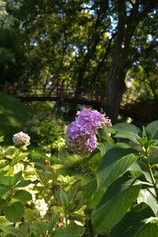 Djiki Japanski vrt