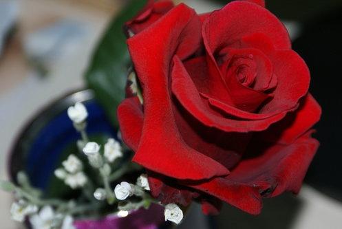 Djiki Ruža