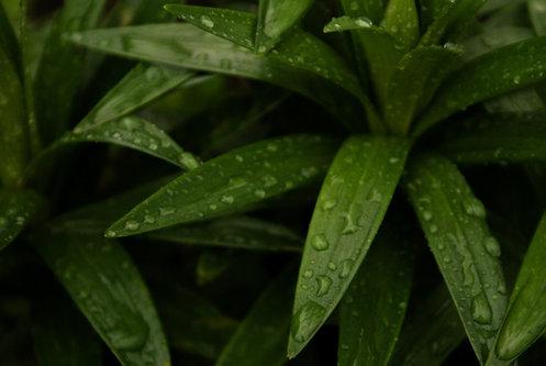 Djiki vazduh miriše na kišu