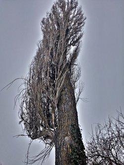 Djole777 Tree
