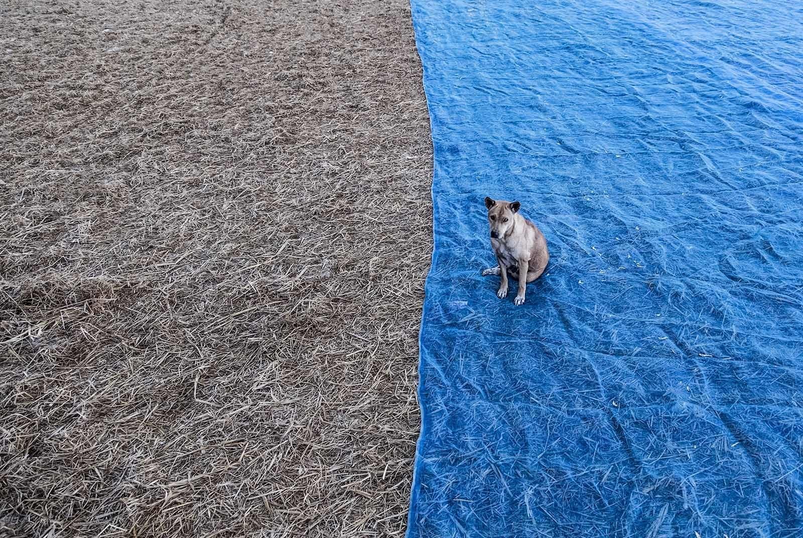 old dog blue