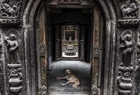 DjoleNomad temple of the dog