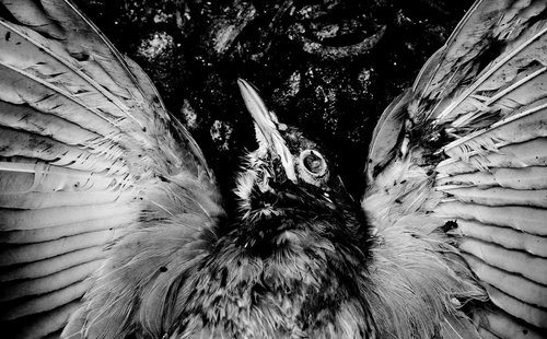 DjoleNomad Dead Bird Don't Fly