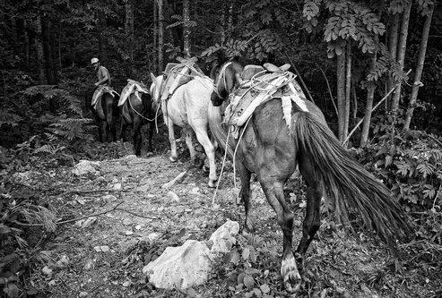 Djuka Sumski konji No1