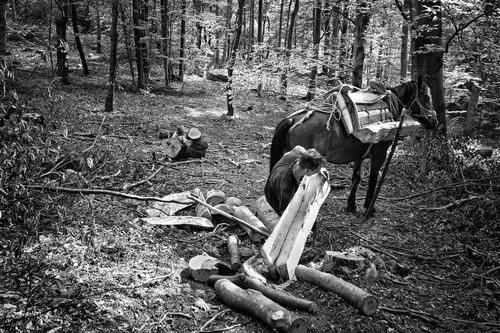 Djuka Sumski konji No2