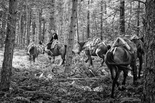 Djuka Sumski konji No4