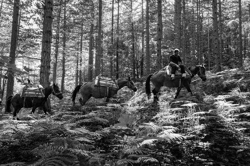 Djuka Sumski konji No5