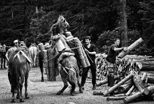 Djuka Sumski konji No7-B