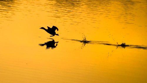 Djuka Ptica trkacica