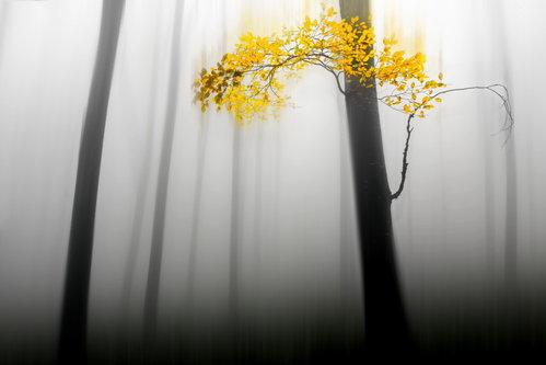 DragisaPetrovic Jesen zivota