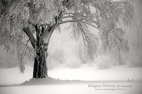 DragisaPetrovic Snegovi beli...