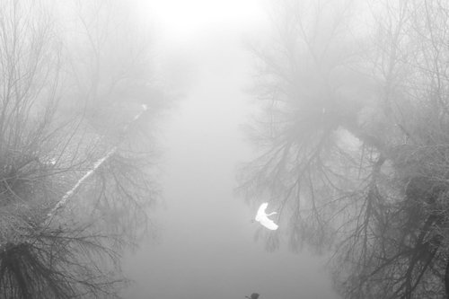 DragoslavS Let kroz maglu