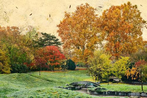 DragoslavS Jesen u parku