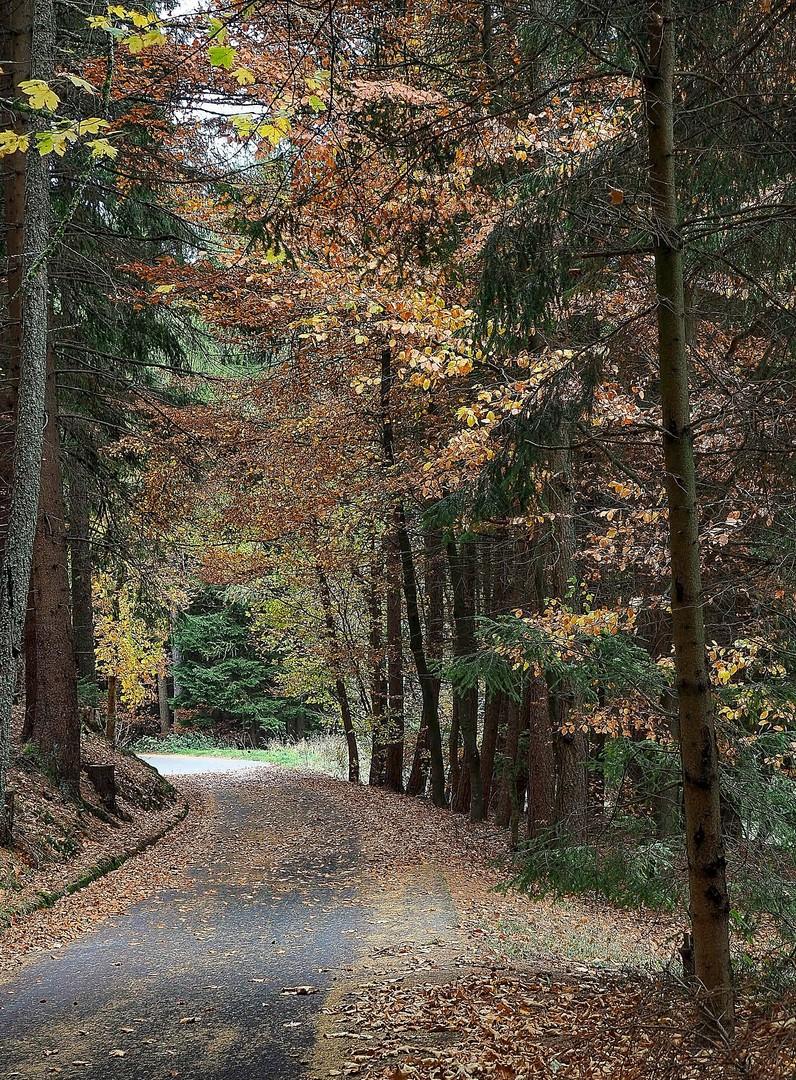 autumn #2