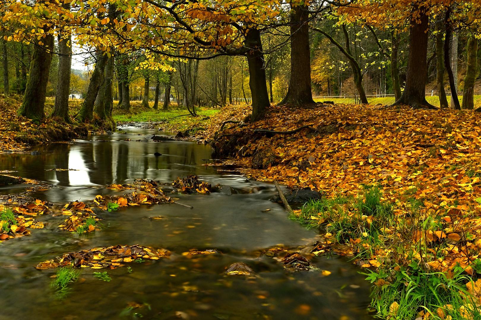 autumn #5