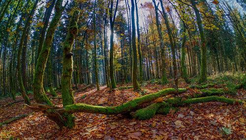 Drrado шума