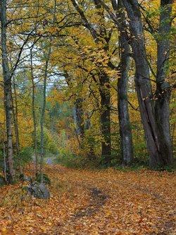 Drrado Jesen je