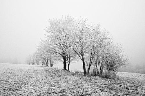 Drrado bez snega