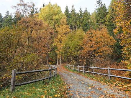 Drrado boje jeseni '2