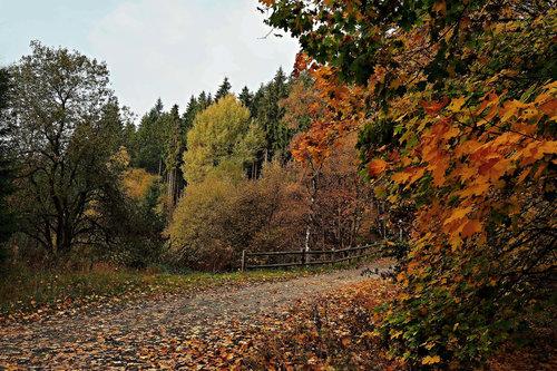 Drrado boje jeseni