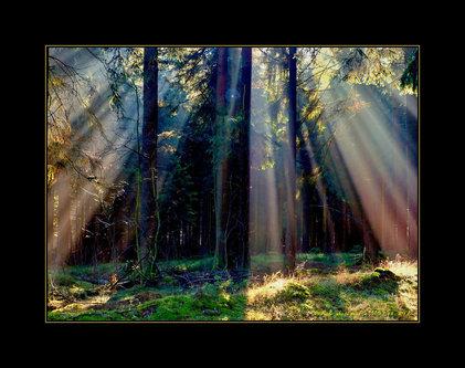 Drrado i bi svetlo