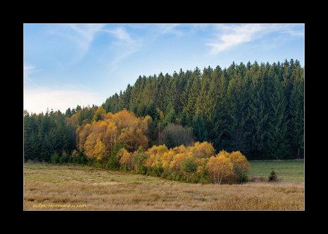 Drrado jesen