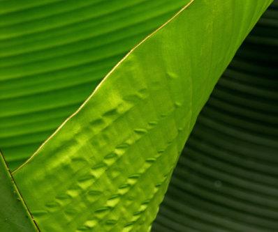 Drrado lišće
