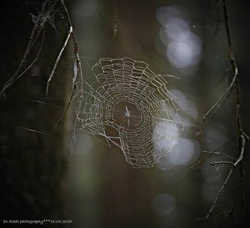 Drrado mreža