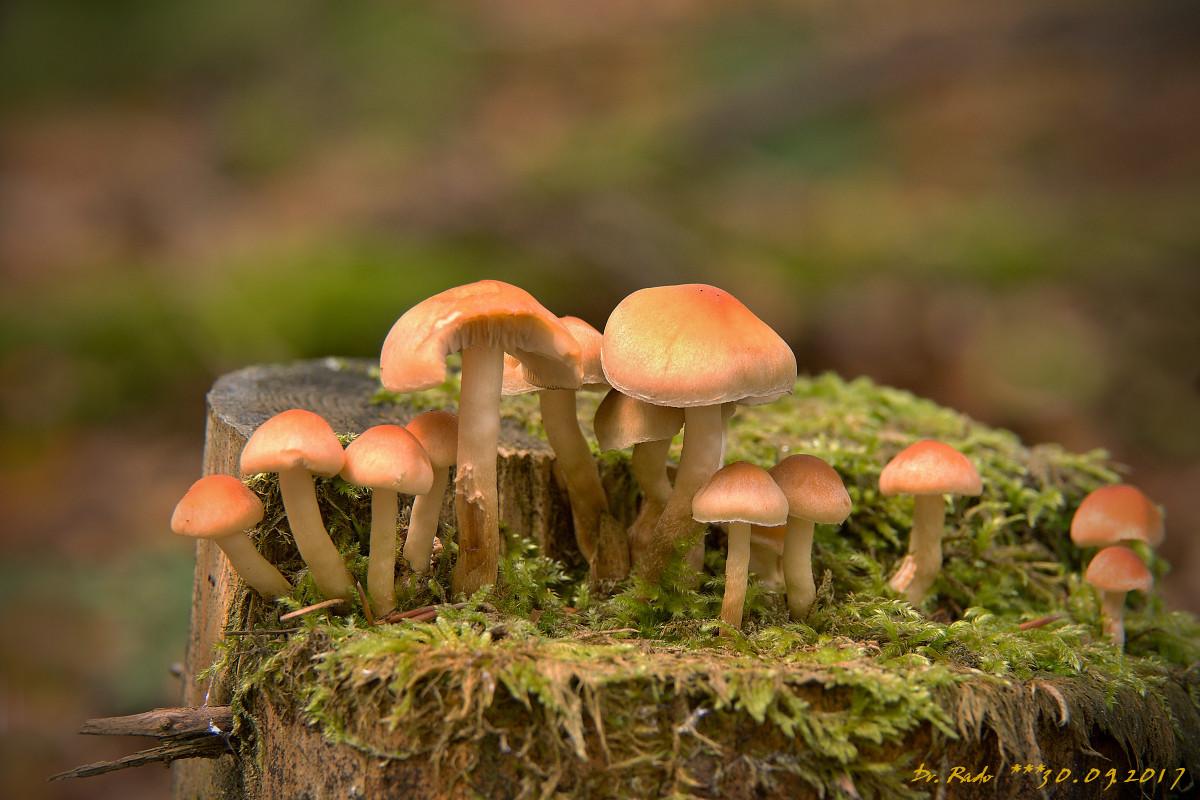 vreme gljiva