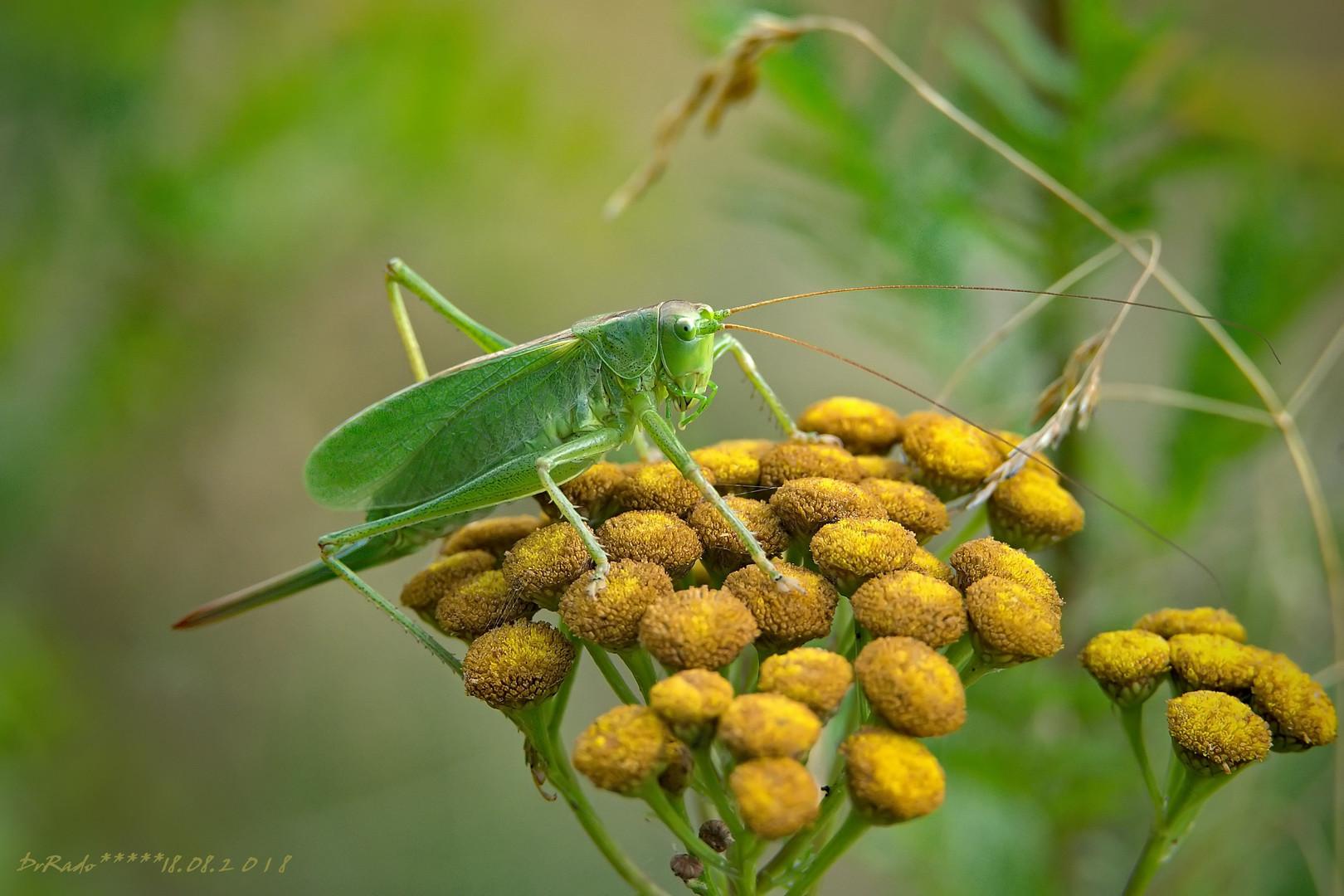 zeleni u zelenom