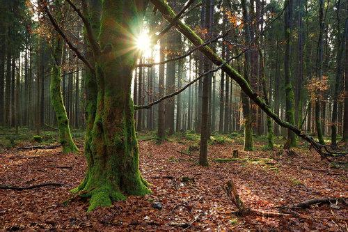 Drrado forest 2