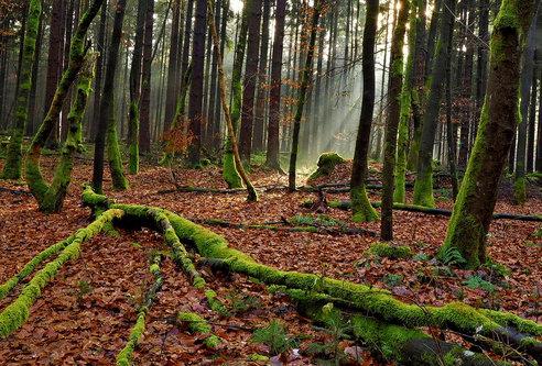 Drrado forest