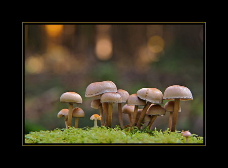 Drrado fungi 3