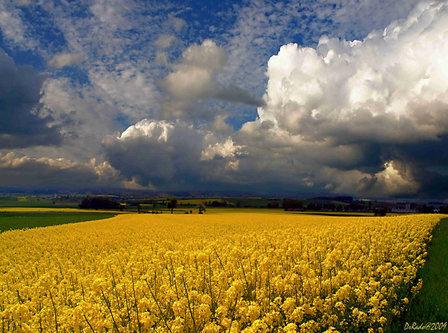 Drrado polje