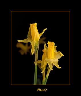 Drrado Narcisi