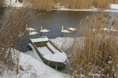 DuKs58 Čamac u trsci  I