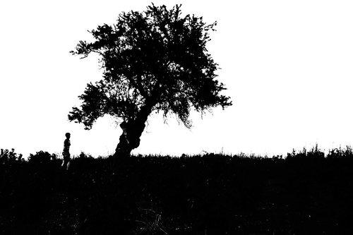 EVPHOTO tree