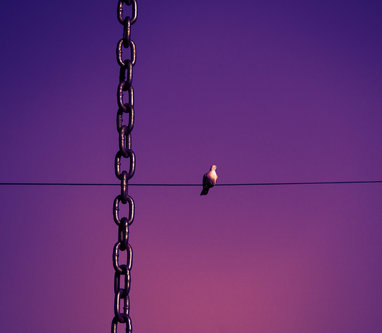 """EVPHOTO """"freedom"""""""