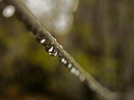 """EVPHOTO """"november rain"""""""