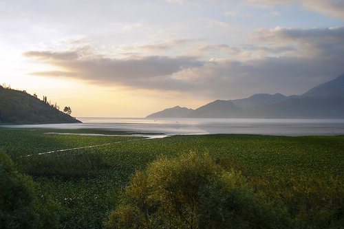 Fica_Bg Jutro nad Skadarskim jezerom