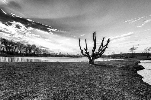 GileCA Strange tree