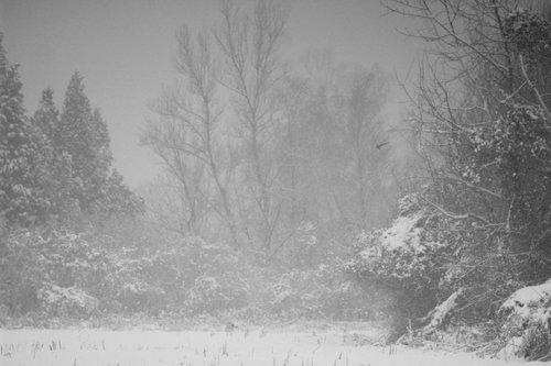 GoranKulezic Zimski miks - sneg, magla, vetar...