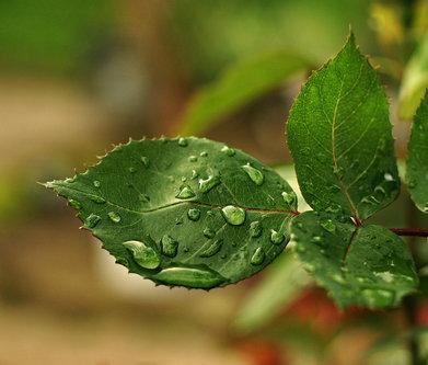 Grimasa Još jedan kišni dan