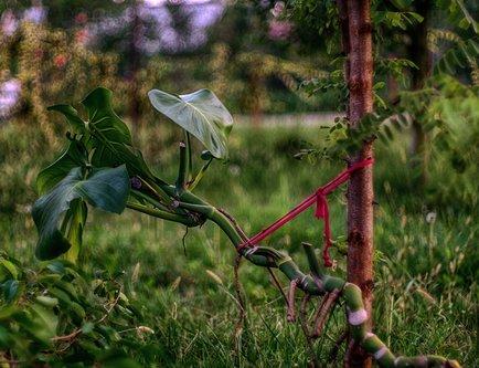 Grimasa Samo lišće